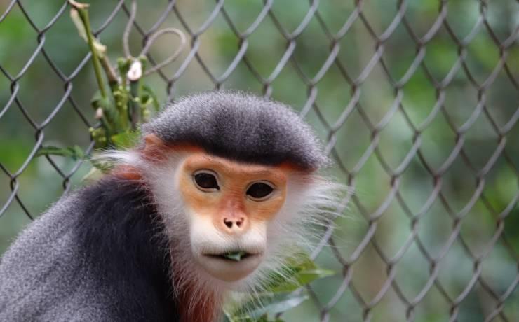 Historia o górze liści i małpach