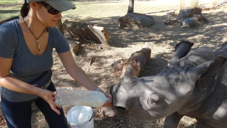 Jak karmiłam 300 kg nosorożca