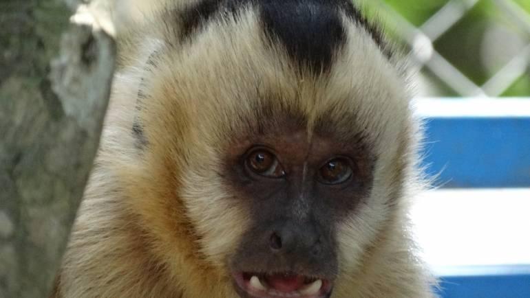 Małpi salon piękności