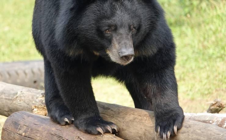 Jak podać niedźwiedziowi tabletkę?