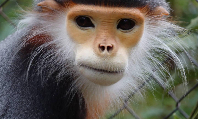 Małpie zaloty