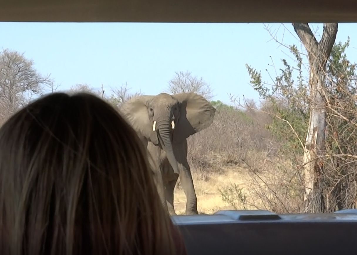 Atak wściekłej słonicy