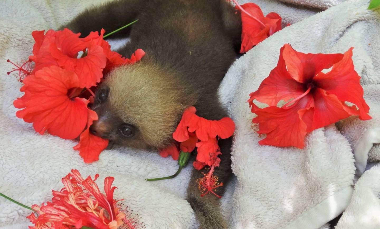 Osierocone leniwce i ich droga ku wolności