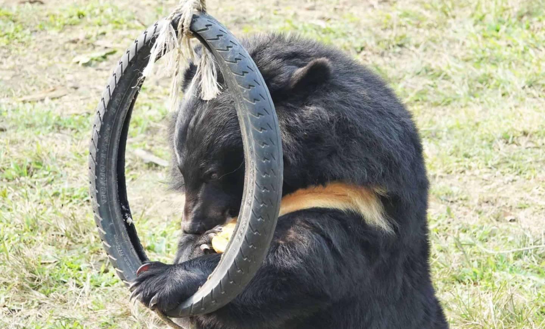 Drugie życie niedźwiedzi