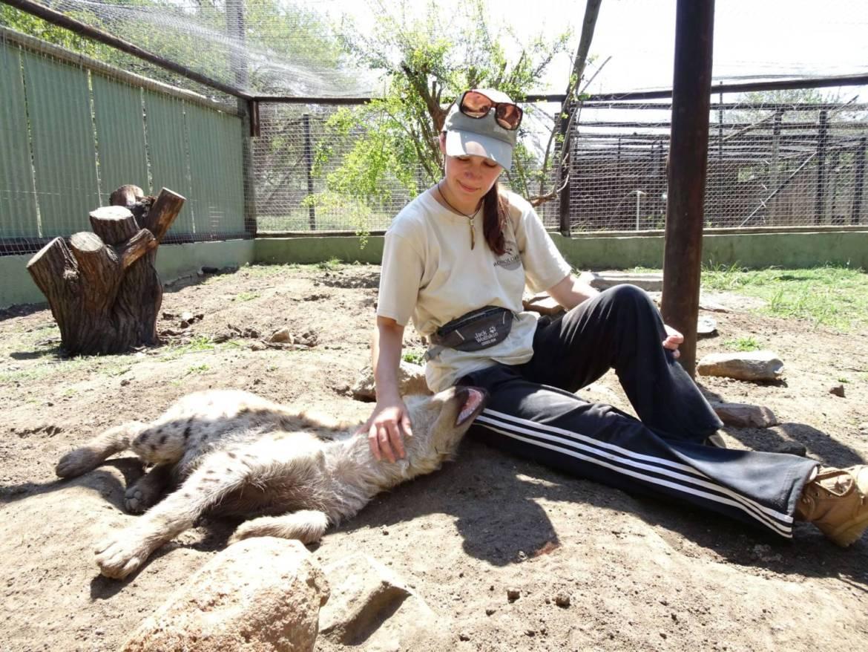 Pokochać hienę