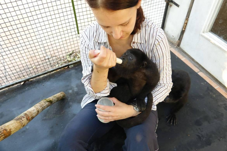 Dzień z życia opiekuna uratowanych małpek