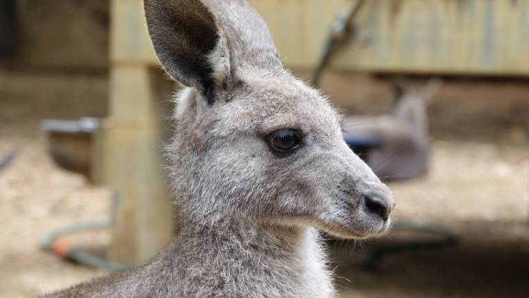 Kangaloola Wildlife Shelter