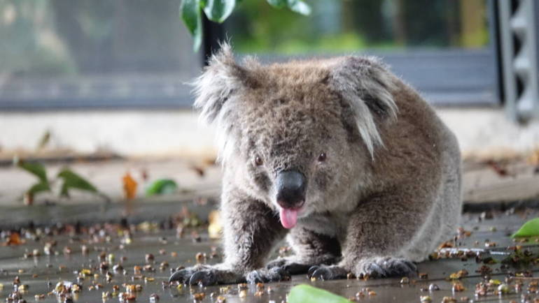 Akcja ratunkowa koali
