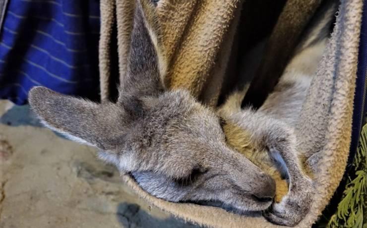 Kangurze przedszkole