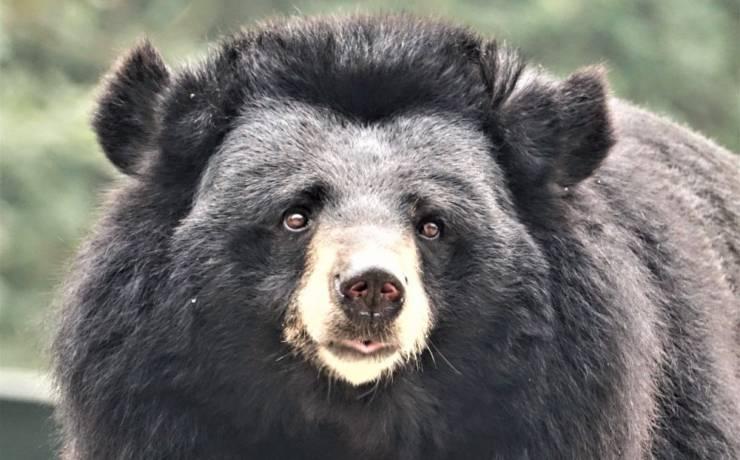 Nowe życie niedźwiedzi