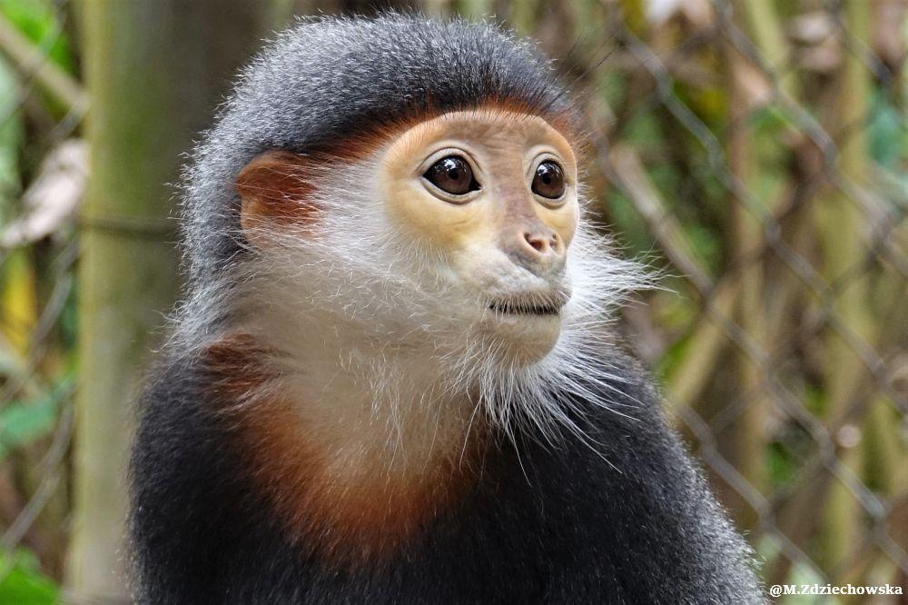 Najpiękniejsze małpki na świecie